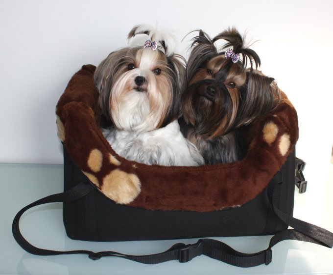 autositz f r hunde hunde autositz autositz hund car. Black Bedroom Furniture Sets. Home Design Ideas