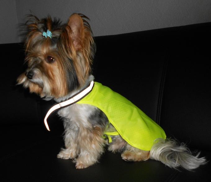 hunde regencape regenanzug hunde regenweste f r hunde hunde regenbekleidung regen cape f r hunde. Black Bedroom Furniture Sets. Home Design Ideas